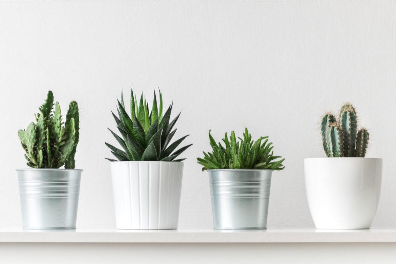 Nashville potted plants.